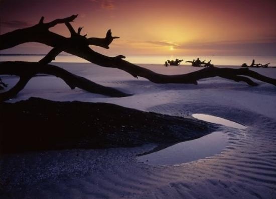 Saint Simons Island, GA: Driftwood Beach