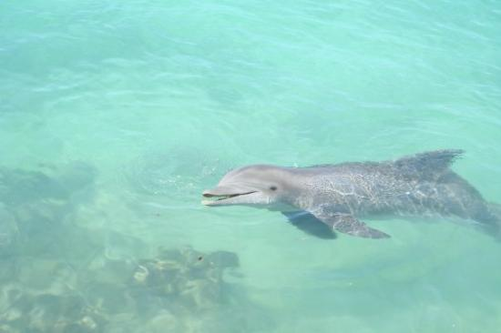 Dolphin Cove: Swimming with the dolphins