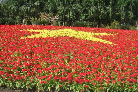 landscape of flowers express of being nationalistic,ho chi minh city
