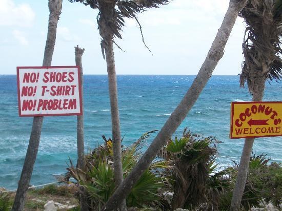 Coconuts Bar and Grill: No Problem!