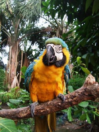 Yacu Puma Center: Parrot