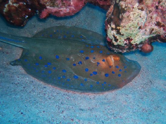 Brayka Bay Reef Resort: brayka bay house reef