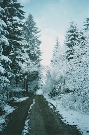 Road into the snowy woods outside of Regen, Germany