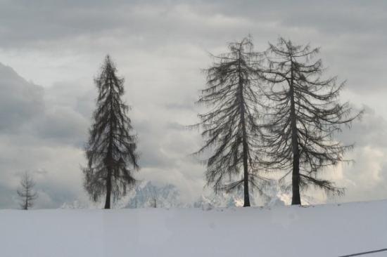 Bolzano Image
