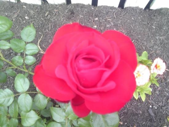 Biddeford (ME) United States  City new picture : Biddeford, ME: Beautiful!