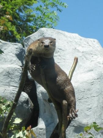 ริเวอร์เฮด, นิวยอร์ก: Otter in a tree!