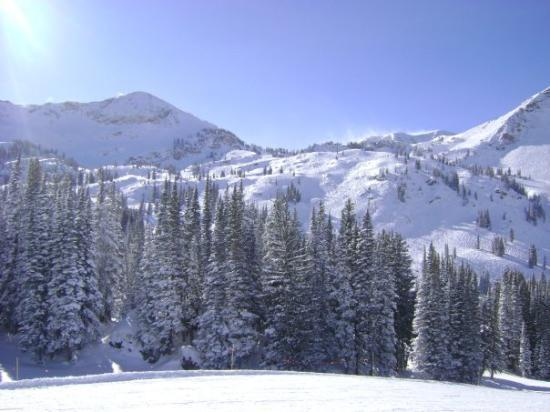 Alta, UT: Beautiful day to ski.