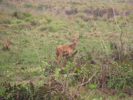 Camp Rhino: this photo is taken  in jeep safari