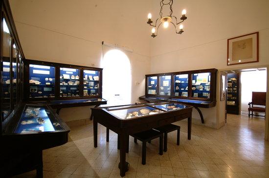 Museo Ignazio Cerio