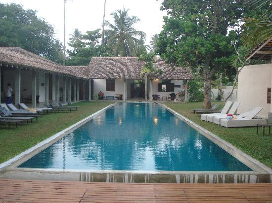 Frangipani Tree: Pool and reception
