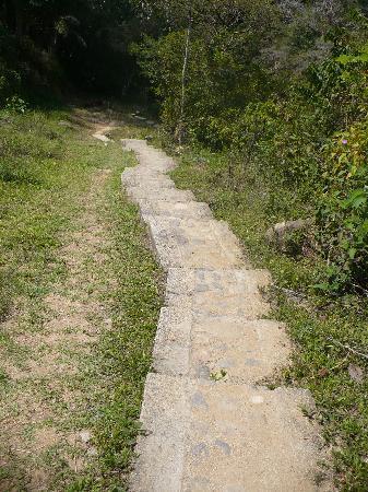 Vallarta Botanical Gardens: One of the many steps