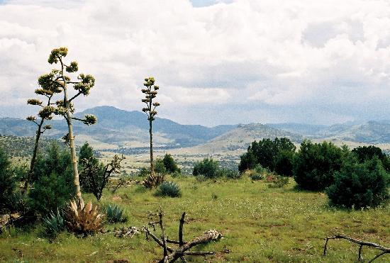 Harvard Lodge at Sproul Ranch: Scenery