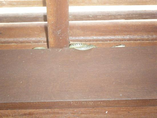 Haadtien Beach Resort: a little visitor in the morning