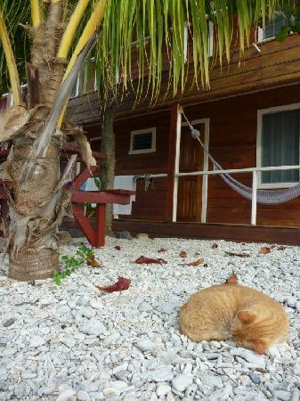 Rubi's Inn: The Resident Cat