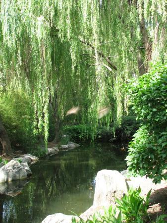 Chinese Gardens of Friendship, Darling Harbour, Sydney. November ...