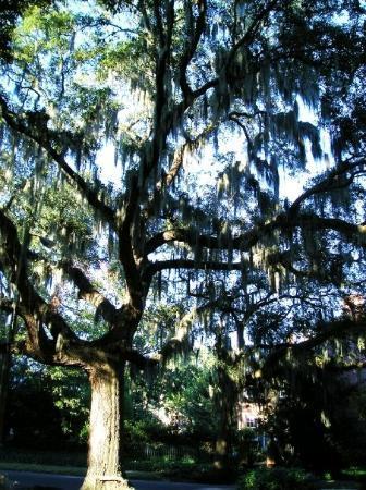 Bilde fra Savannah