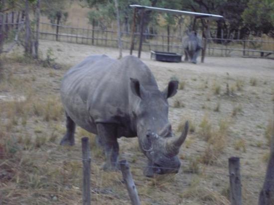 Χαράρε, Ζιμπάμπουε: Rhino