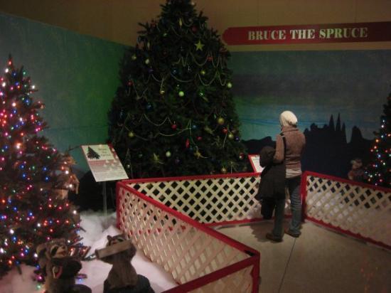 Neville Public Museum: talking to bruce