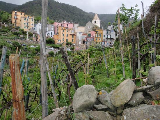 La Torre: Little Corniglia and its vineyards