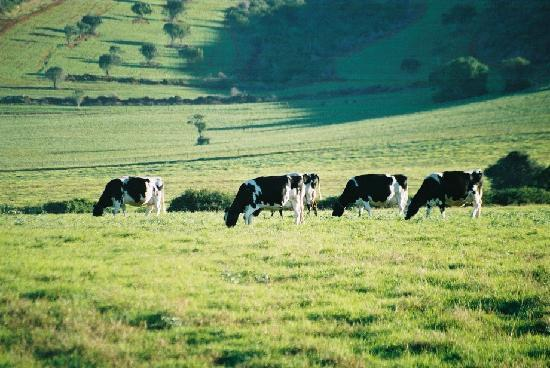 The Green Tree Guest Cottages: Dairy Farm