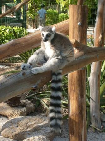 Ardastra Gardens, Zoo and Conservation Center: He's chillen