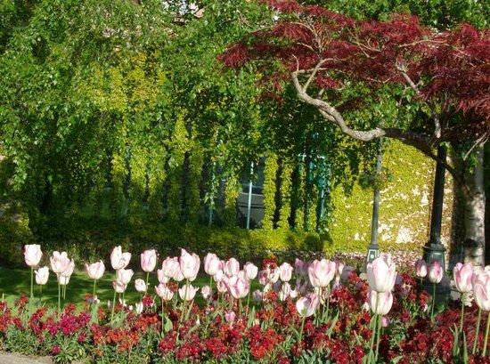 Queen Elizabeth Park: Spring time in Victoria, Canada.