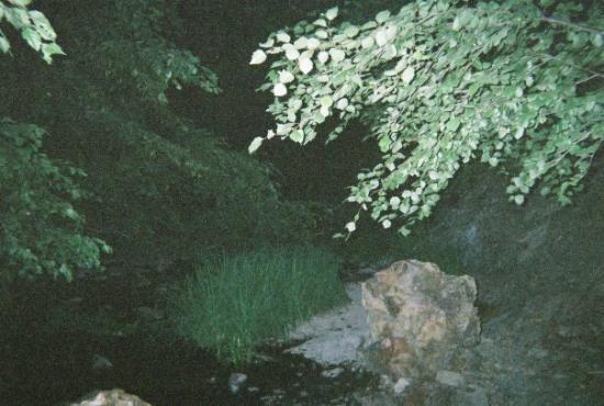 Bilde fra Kuna
