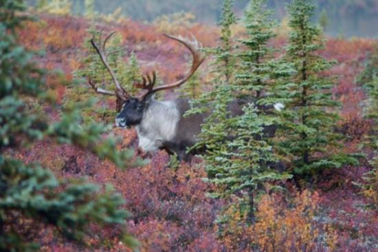 denali national park singles & personals During these days, winners of a lottery drawing are given a chance to purchase a single, day-long permit ,  denali national park - 2018 road lottery information.