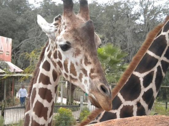 Bilde fra ZooTampa at Lowry Park