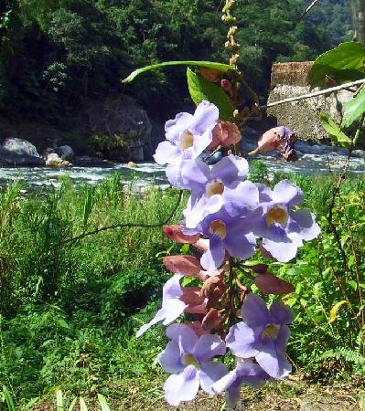 Villas Pico Bonito : Adding orchids to the already stunning Rio Cangrejal vista makes this place impossibly beautiful