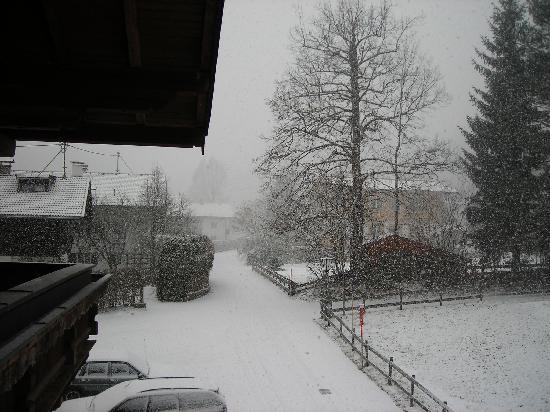 Waldrand: Snowy scene