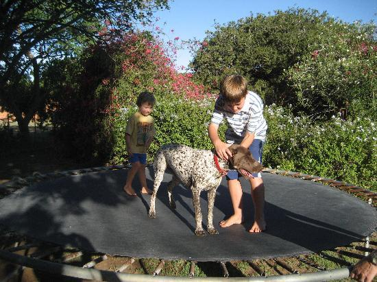 The Green Tree Guest Cottages : Fun for kids and dogs too!