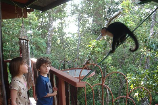 TreeTop House: Grandkids on Deck with the Monkeys