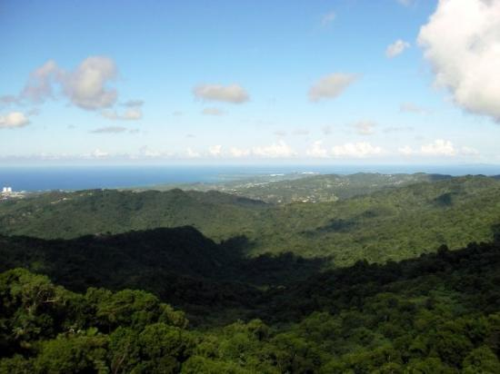 El Yunque National Forest Foto