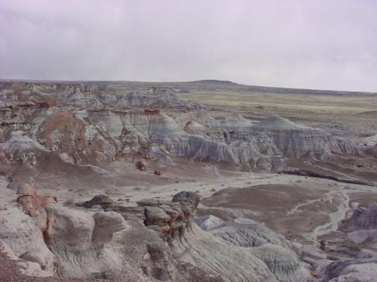วินสโลว์, อาริโซน่า: Petrified Forest