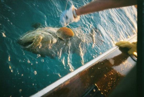 Key Largo, FL: a huge catch in key west
