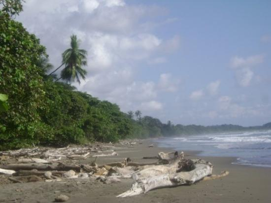 Dominical, Costa Rica: CR Jan 09