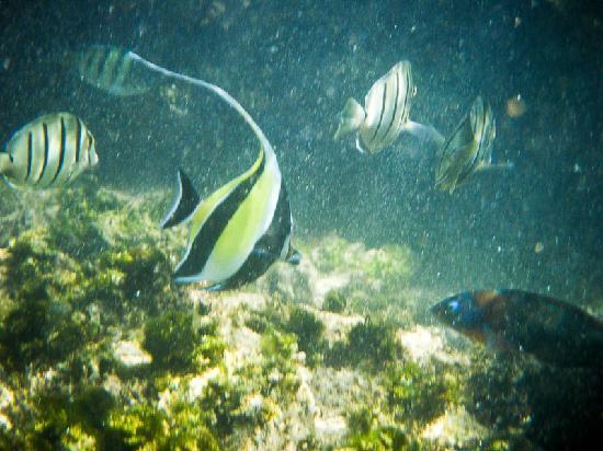 Nohonani Condos: Snorkeling at Nohonani beach