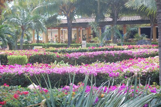 Melia Cayo Santa Maria: Lush gardens