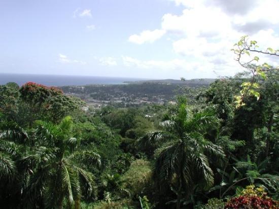Shaw Park Gardens & Falls - Ocho Rios, Jamaica