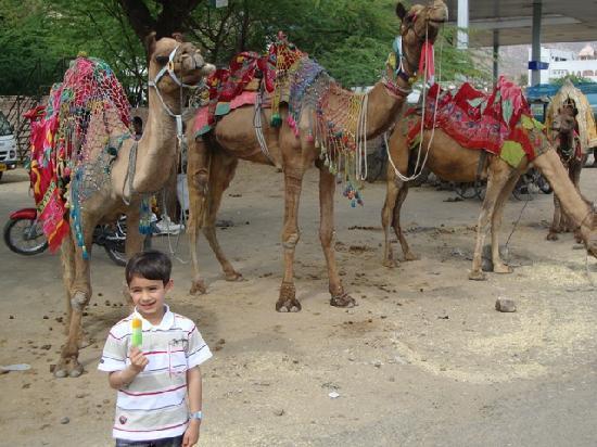 ชัยปุระ, อินเดีย: Camel Safari at Jaipur