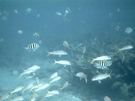 Sand Dollar Cruises: Friendly fish