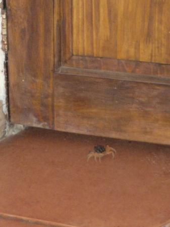 Dominical, Costa Rica: nos invadieron los cangrejos jaja!