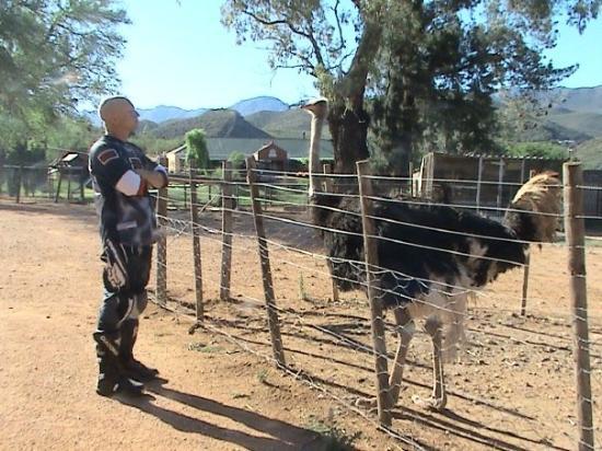Hermanus, Südafrika: Alex conversing with his latest bird !