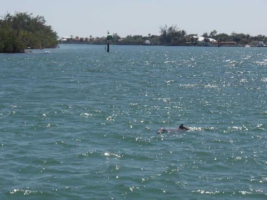 Stuart, فلوريدا: Dolphin