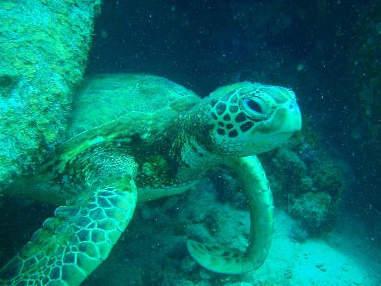 Bayu Dive Lodge: One of the local reef residents