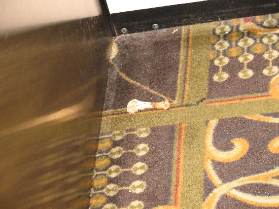 Clarion Hotel & Conference Center: Chicken bones on the elevator. smh