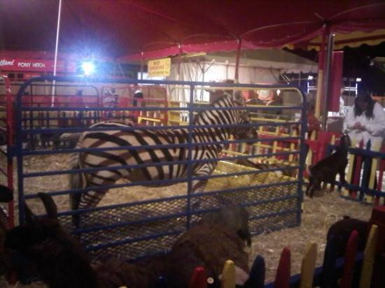 The Big E: zebra