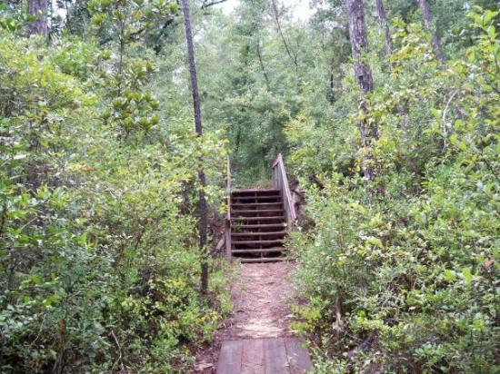 Milton, Флорида: clear creek nature trail