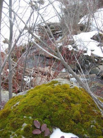 Bilde fra Twin Falls